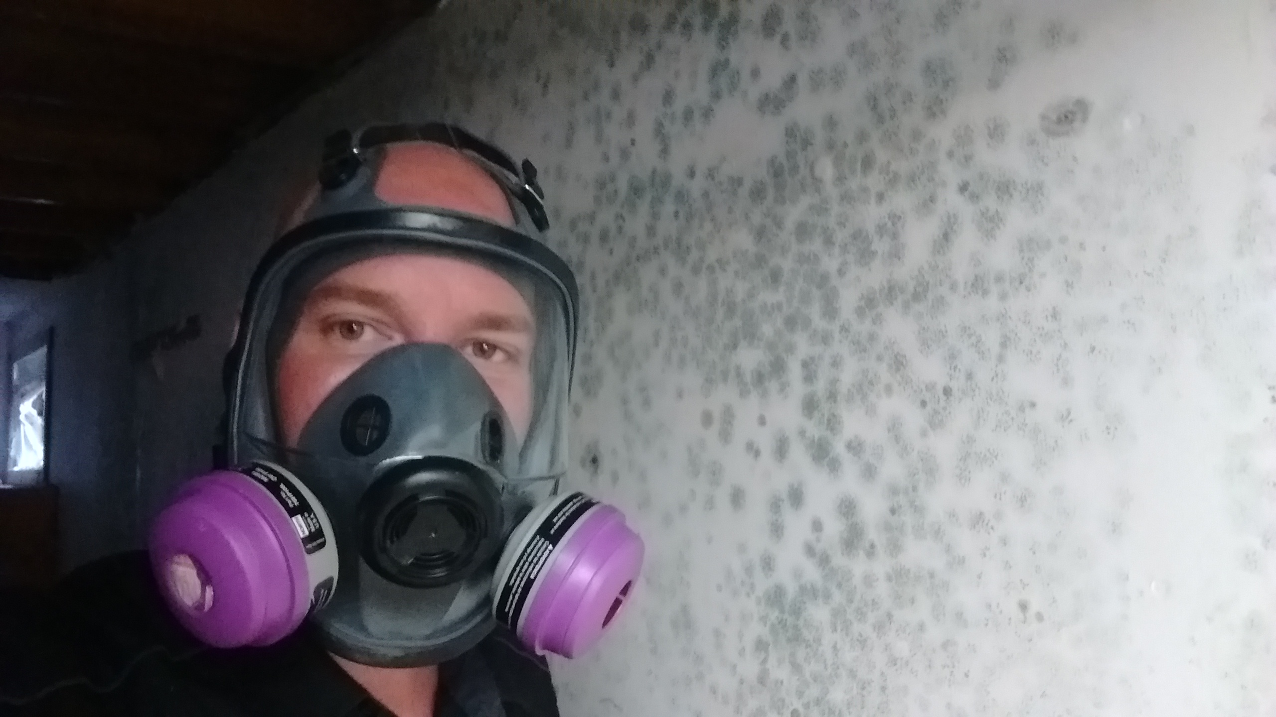 Certified Mold Inspection Services In Edmonton